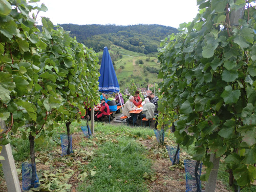 Wine tour 2012